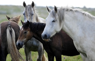 "Even Wild Horses Need Their Girlfriends • Fire Turns Irwin Land Into An ""Animal Graveyard"""