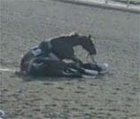Horse Killed In Collision At Churchill Downs