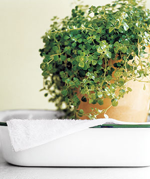 Leave Plants in a Sink or Tub Of Water When Away for Worry-Free Watering