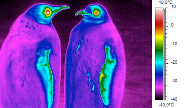 Click here to read Whoa, Penguins Are Actually Colder Than Their Antarctic Surroundings