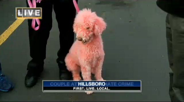 Gay Couple Attacked with Wrench Over Pink Poodle's 'Un-American' Color