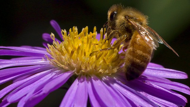 Click here to read Bees love caffeine just as much as we do