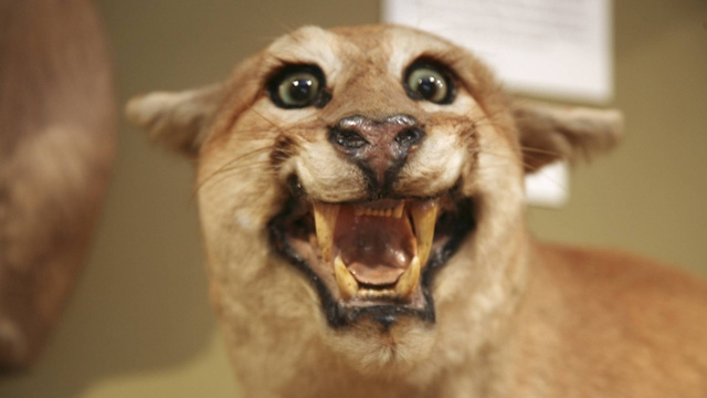 Ten Bizarre Tales of Taxidermy