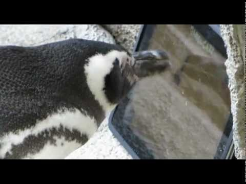 "Click here to read Penguins Allowed To Enjoy ""Obsolete iPad"""