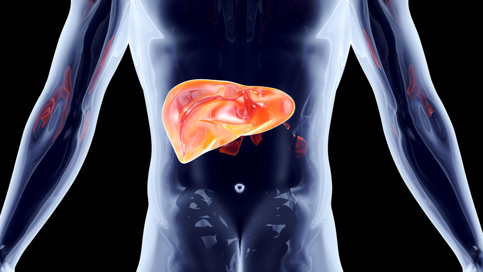 Doctors Can Now Keep Livers Alive Longer
