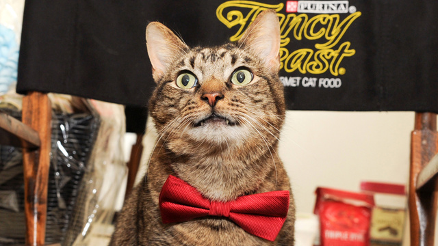 No-Talent Hack Cat Fired from Broadway for Sucking