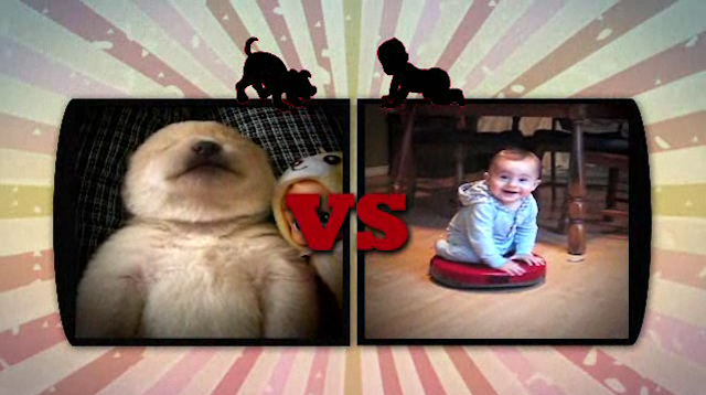 OMG, Puppies Vs. Babies Is A Real TV Show