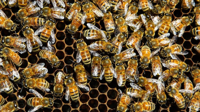 All It Takes Is 25 Million Bees To Make People Really Freak Out