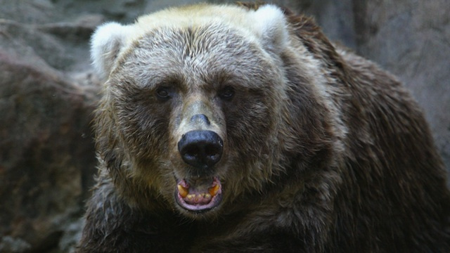 Man Planned To Kill Ex While Wearing Bear Suit