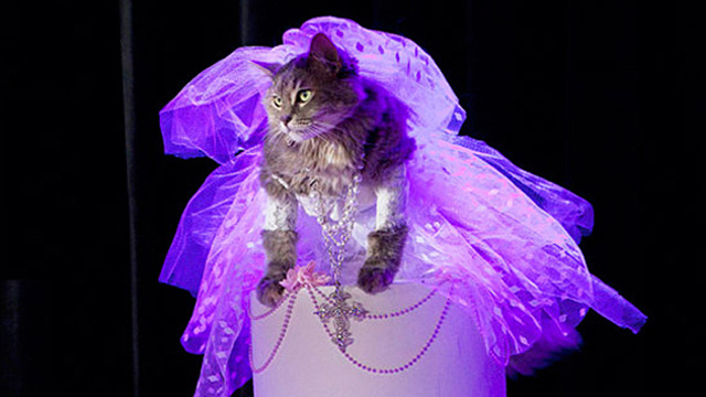 Madonna's 1984 'Like A Virgin' Performance, As Reenacted By A Cat