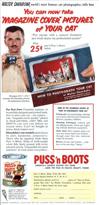 Internet's High Cat Content Traced Back To 1950s Ad