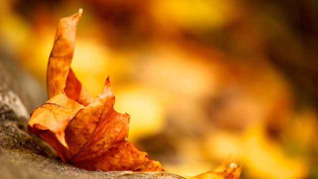 Give Your Desktop a Taste of the Fall Season with These Autumn Wallpapers