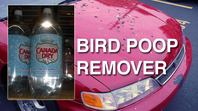 Remove Bird Droppings from Your Car with Seltzer Water