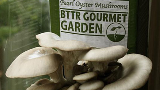 Grow Your Own Mushrooms with a Kit Full of Coffee Grounds