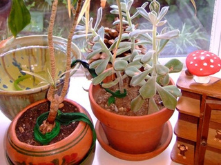 Use Cotton Strips for No-Fuss Houseplant Watering