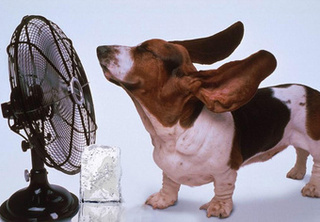 Five Effective DIY Alternatives to Running an Air Conditioner