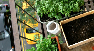 Learn to Grow Plants and Food With Beginner Garden Projects