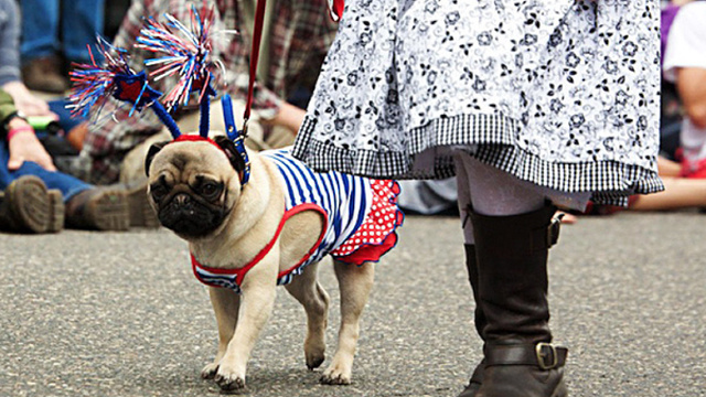 "Highlights From ""Puglandia,"" Oregon's Annual Pug Crawl"