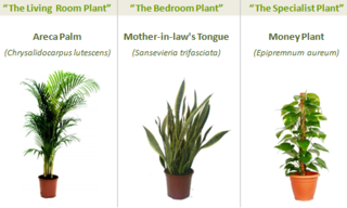 Three Plants that Give You Better Indoor Air