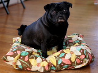 Weekend Project: Make your own pet bed for cheap