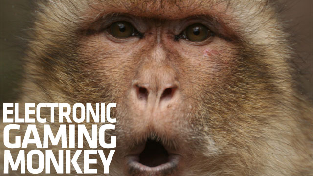 Monkeys Express Self-Doubt Through Computer Gaming