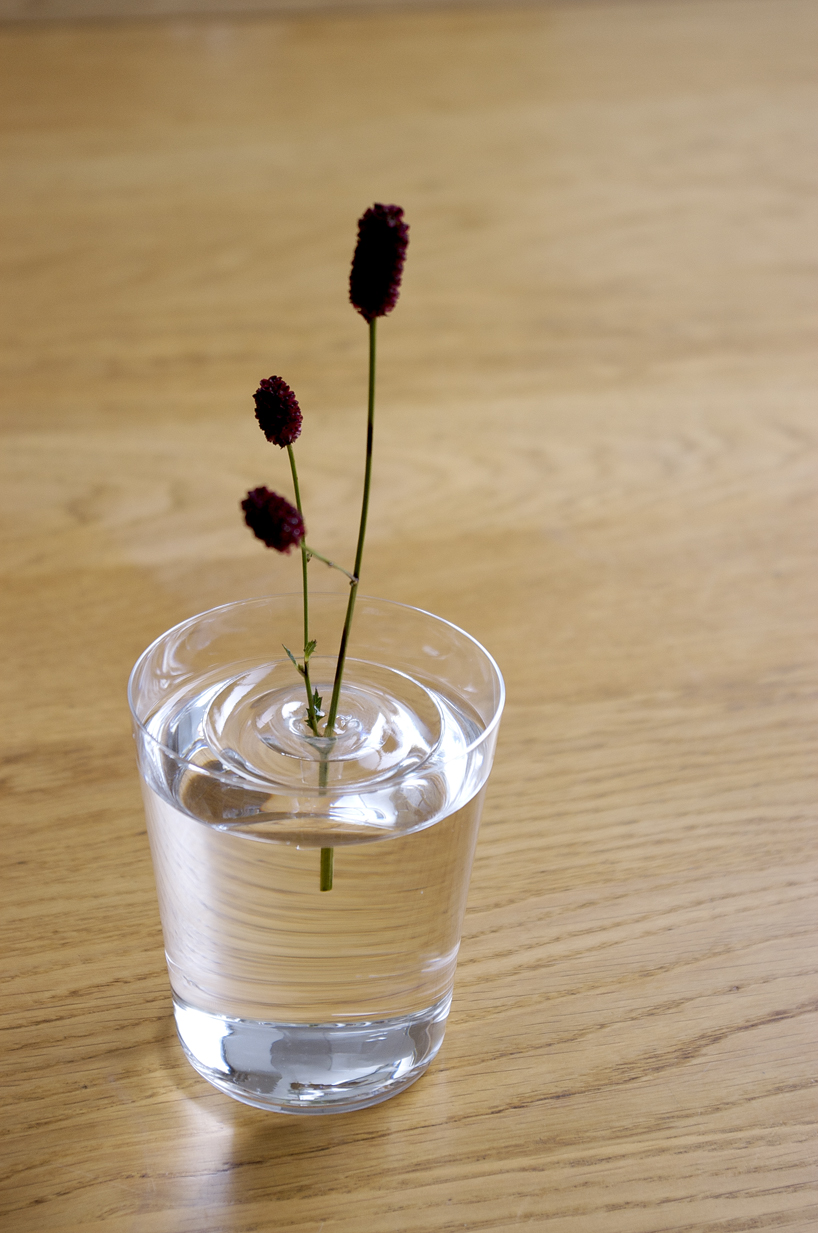 Flower vase pronunciation - Not All Of Us Have Vats Of Water Or Decorative Ponds Just Laying Around But Just One Floating Ripple Vase And A Glass Makes For A Vase That S Far More