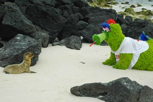 A Perfectly Designed Killing Machine, The Phillie Phanatic Silently Stalks Its Prey