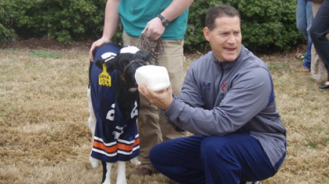 Cam Newton Is Still Gene Chizik's Golden Calf