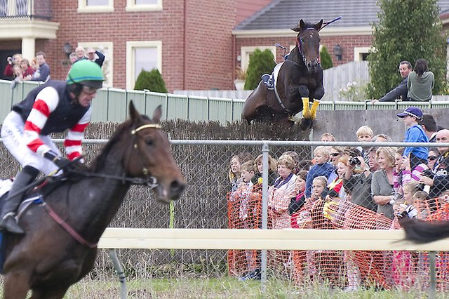 Wild Australian Horse Decides To Run Away From A Steeplechase Course And Over The Crowd