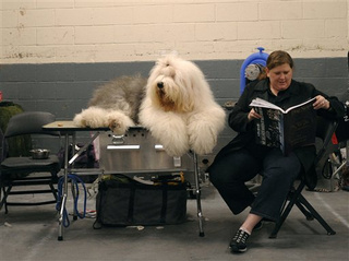 More Puppy Love From the Westminster Dog Show
