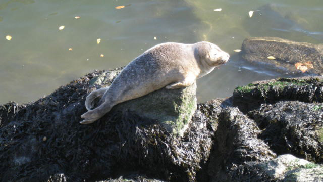 Adorable Baby Seal Occupies Mayor's Mansion