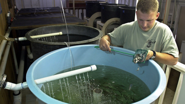 Farming Nemo: How Aquaculture Will Feed 9 Billion Hungry People