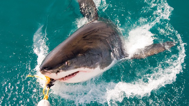 Bodyboarding Tourist Ripped Apart by Shark