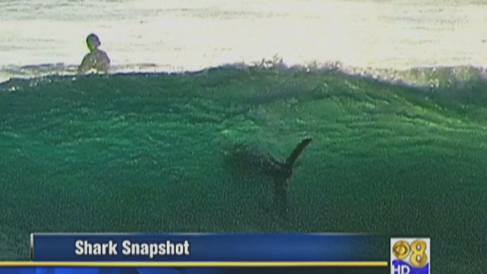 Citizen Paparazzo Snaps San Diego Shark