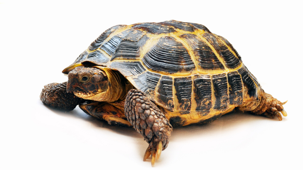 JFK Runway Shut Down Because of Turtle Infestation