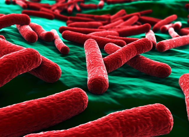German E Coli Outbreak Caused By New 'Mutant' Strain