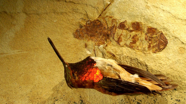 Hummingbird-Sized Ant Fossil Discovered in Wyoming