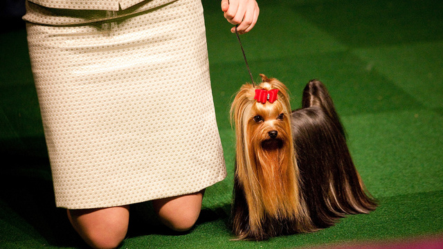 Elegant Updos and Classy Coats at the Westminster Dog Show