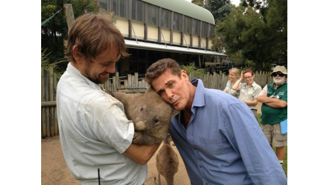 David Hasselhoff Is Chilling with a Wombat