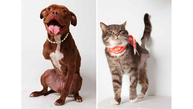 Adorable Adoptable Animals in Accessories Will Make Your Eyes Leak