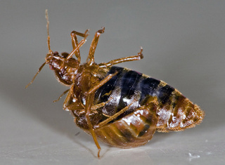 Manhattan Borough President Declares War On Bedbugs