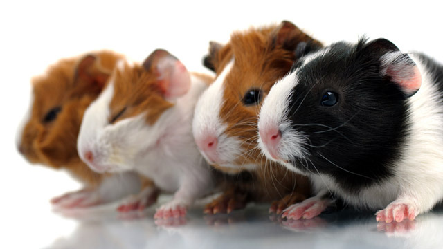 The 'Cruelty-Free' Part Of Your Cosmetics Is Meaningless