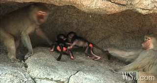 Want to Help Name These Two Cute Baboon Babies?