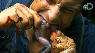 Bear Grylls Eating Something Awesome