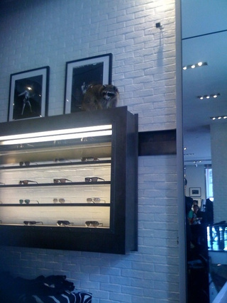 Raccoon Infiltrates John Varvatos' SoHo Flagship