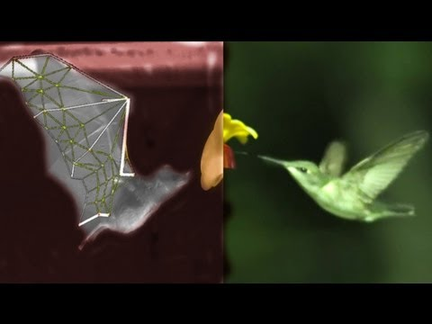 Click here to read Watching Bats Fly In Slow Motion Reveals Biological Badassery