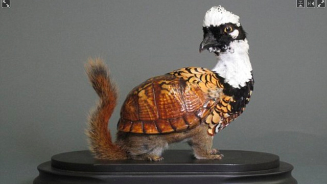 Behold the Horrors of Mutant Taxidermy