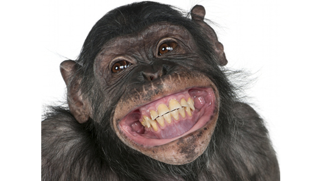 Proven: The More Poop a Chimp Throws, the Smarter it Is