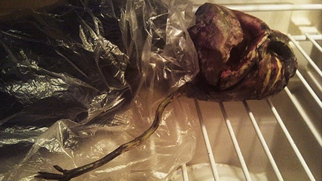 A Crazy Woman Kept a Rotting Vegetable in Her Fridge for Two Years Because She Thought It Was an Alien