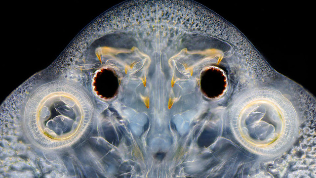 Seeing the Scary Wondrous World in These Micro Photos Will Give You Beautiful Nightmares